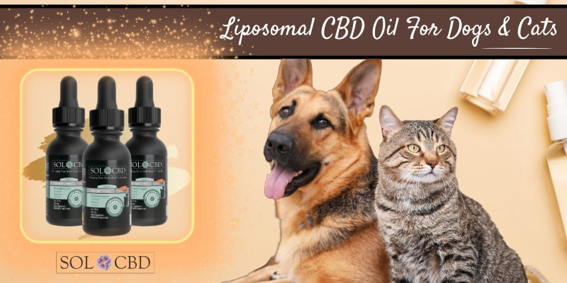 We'll walk you through everything you need to know about using CBD oils for older dogs.