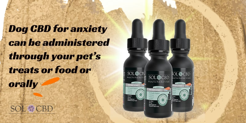Dog CBD for anxiety can be administered through your pet's treats or food or orally.