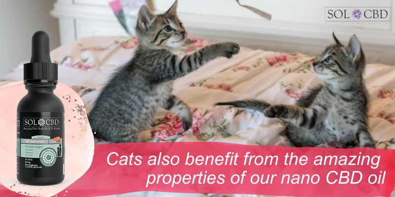 Cats also benefit from the amazing properties of our nano CBD oil.