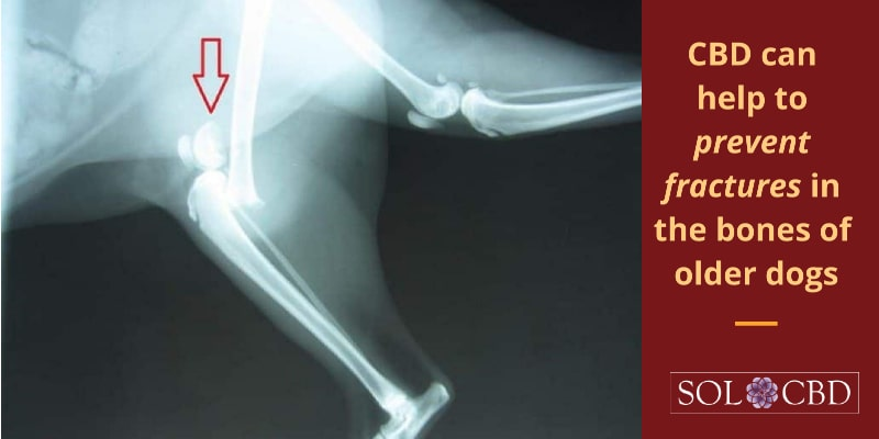CBD can help to prevent fractures in the bones of older dogs.