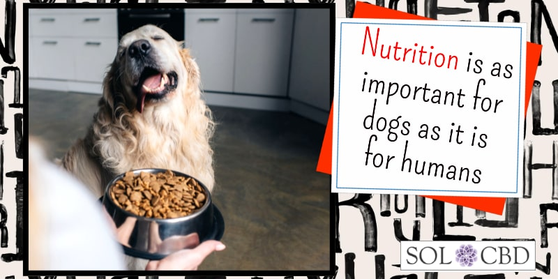 Nutrition is as important for dogs as it is for humans. Add a good CBD supplement to promote general health.