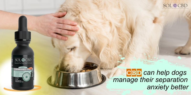 CBD can help dogs manage their separation anxiety better.