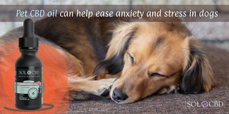 Pet CBD oil can help ease anxiety and stress in dogs.