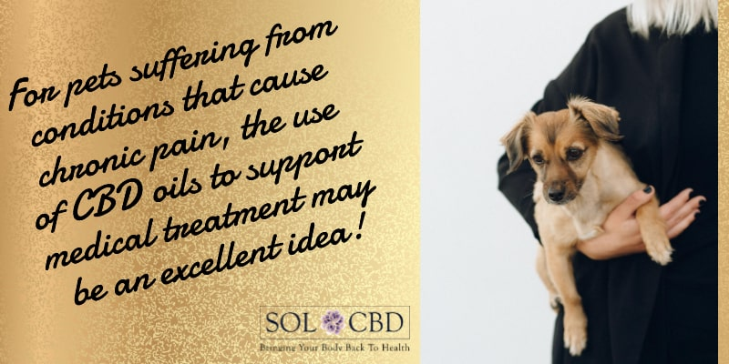 For pets suffering from conditions that cause chronic pain, the use of CBD oils to support medical treatment may be an excellent idea.