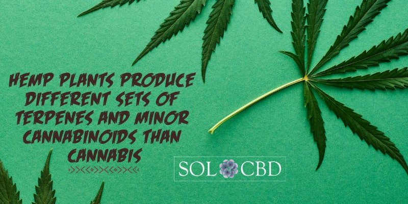 Hemp plants produce different sets of terpenes and minor cannabinoids than cannabis.