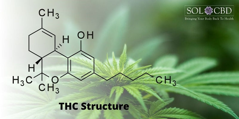 CBD works better with other cannabis compounds like THC, terpenes, and other phytonutrients found in the plant.
