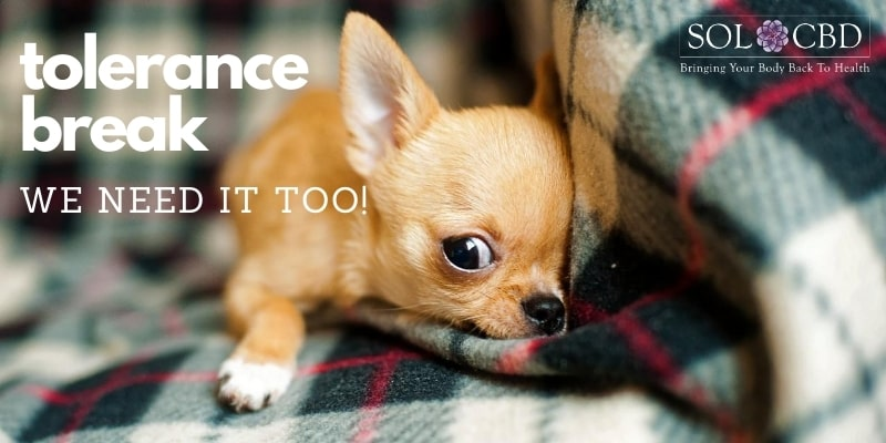 Tolerance development is possible in pets and should be considered by those giving CBD for long periods.