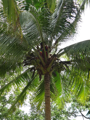 Man in palm tree