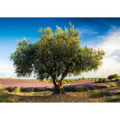 Puzle, 1000 - Olive tree in province