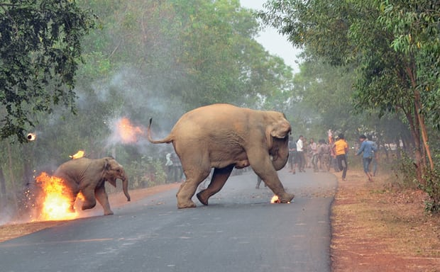 Hell isn't here as yet for Indian Elephants!