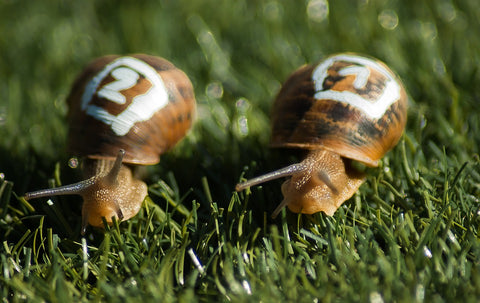 snails, race, slow and steady