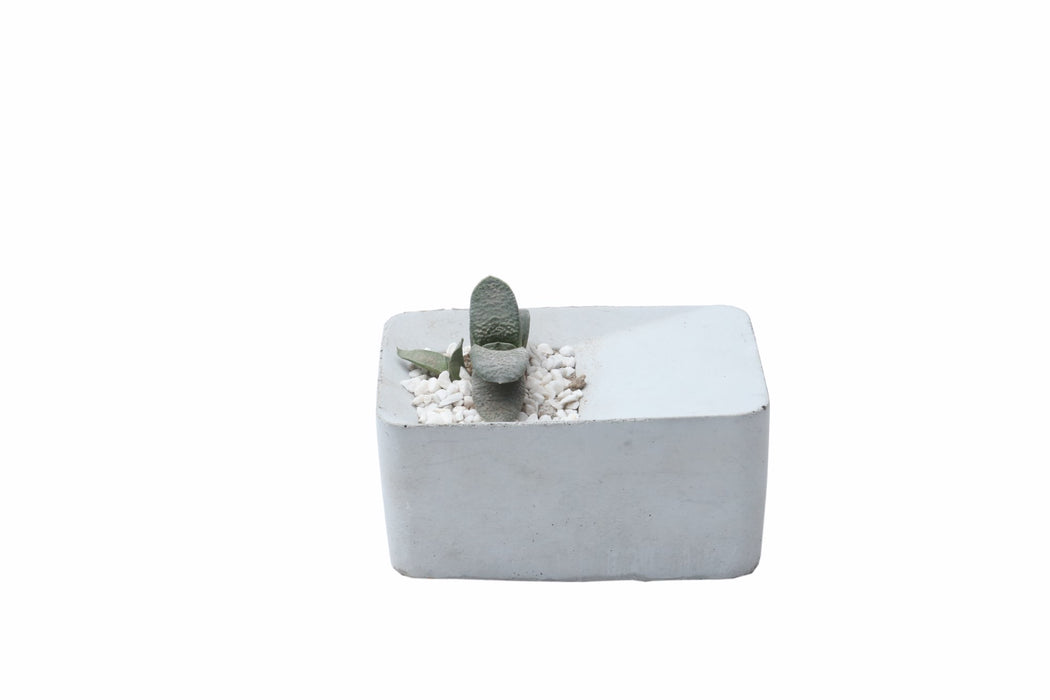 Concrete Planter - Double Block