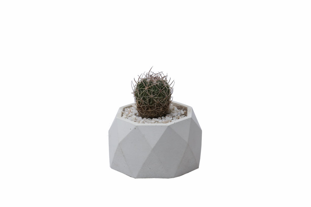 Concrete Planter - Polygonal
