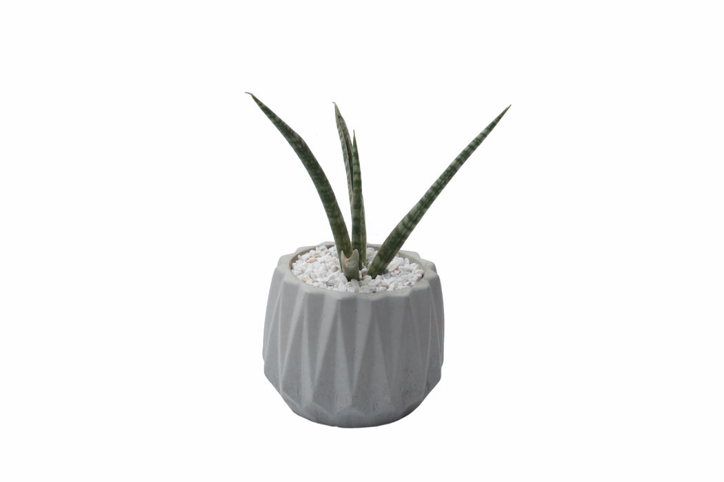 Concrete Planter - Ribbed
