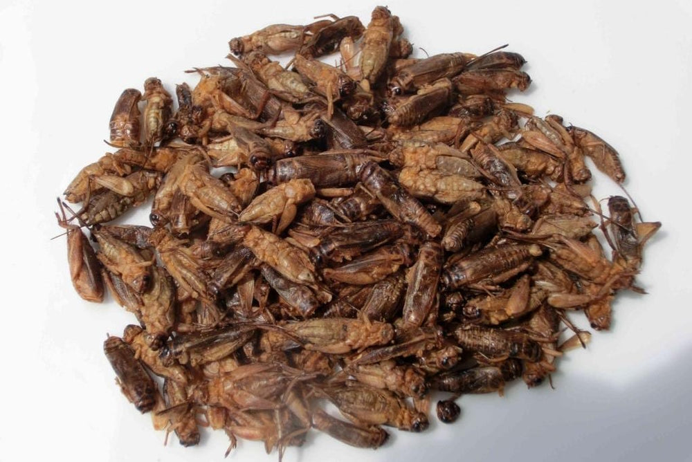 Crunchy Cricket Snack - Oriental Mix
