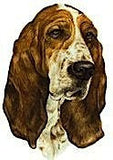 Basset Hound ( Head ) - Shaped Wooden Fridge Magnets