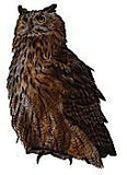Eagle Owl Jumbo Wooden Bird Fridge Magnet