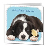 "Border Collie ""Little Whispers"" Birthday Card A little bird told me ...."
