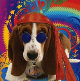 Basset Hound ' Peace ' Birthday greeting card