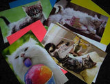 Assorted Cat Gift Tags Pack of 4 mini card by Avanti