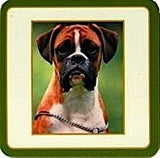 Boxer dog Drinks Coaster (Red) - classic style