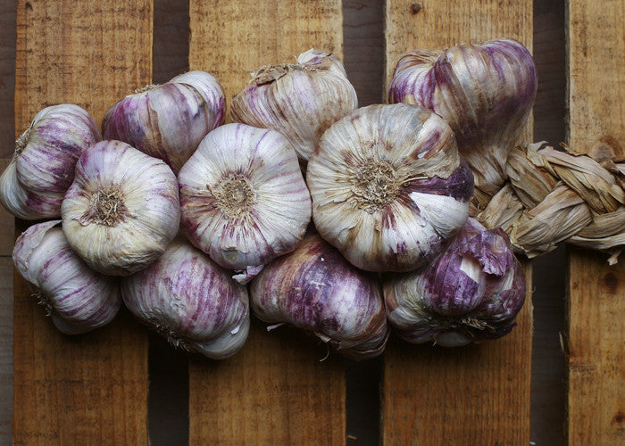 Purple Garlic
