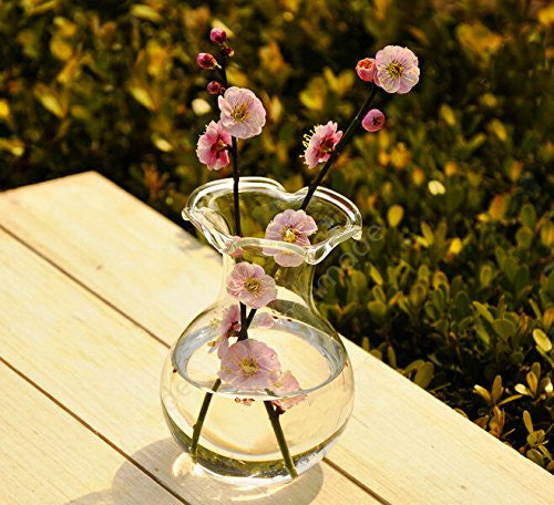 Hand-blown Clear Glass Scalloped Lipped Flower Vase for Home or Office