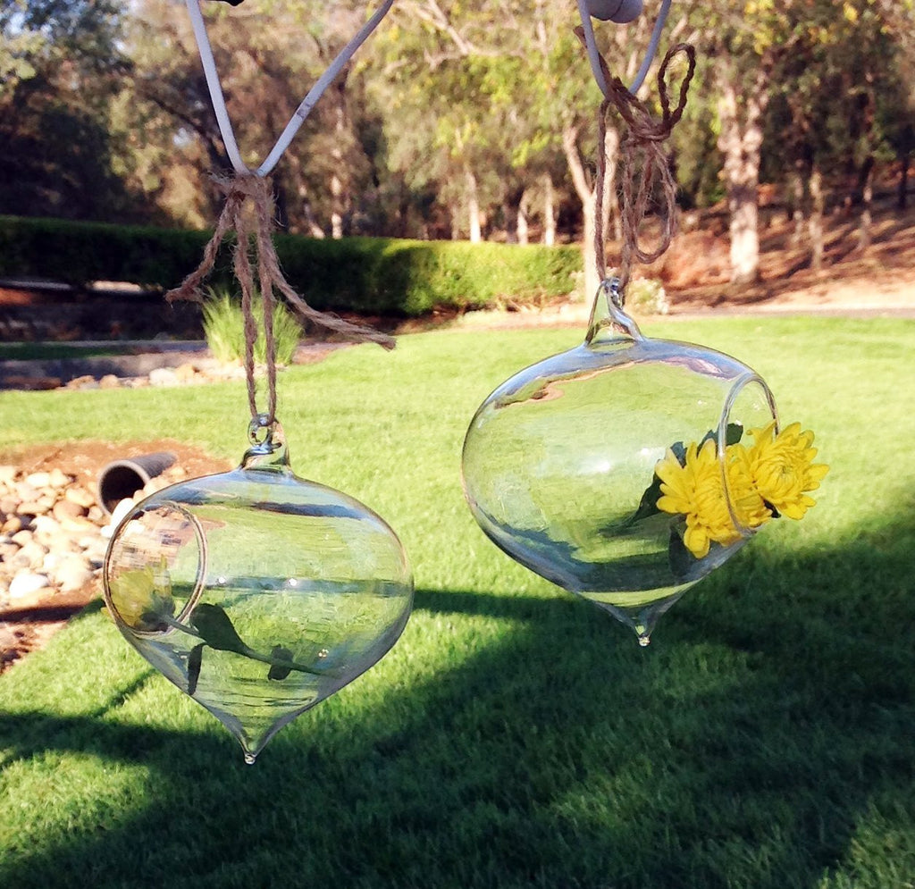Set of 2 Turnip Shaped Glass Globes for Hydroculture or Fresh Cut Flowers