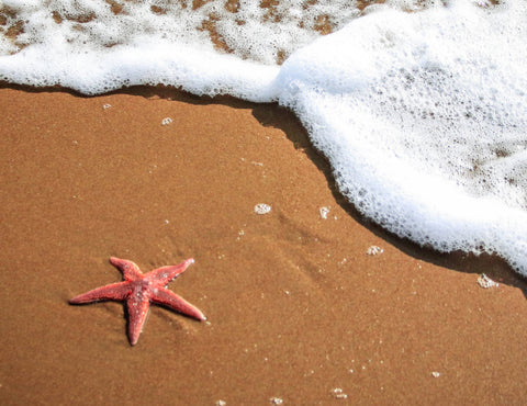 starfish on the sand with seafoam