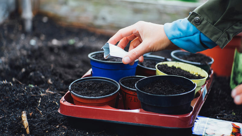 Starting your vegetables from seed