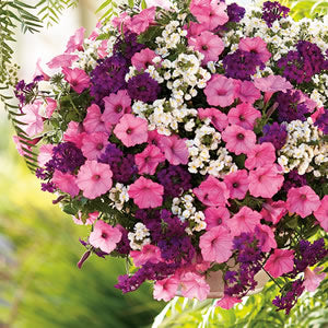 "10"" Hanging Baskets of annuals starting at"