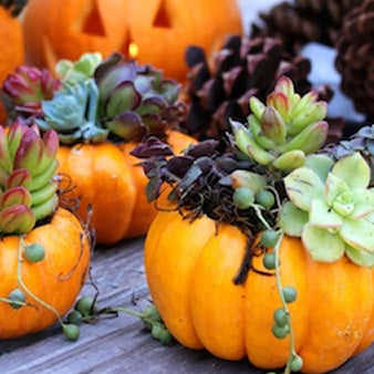 Make your own Pumpkin Succulent Arrangement October 6, 2018