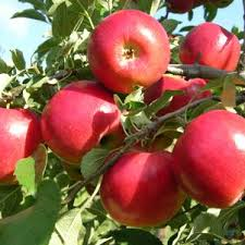 Fruit Trees: Apple, Pear, Peach, Cherry
