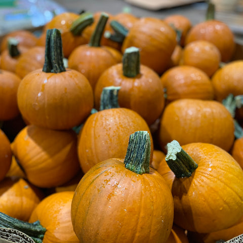 Sugar Pumpkins (Pie Pumpkins)