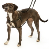 Freedom No-Pull Dog Harness