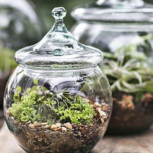 Make your own Terrarium Garden  March 2, 2019