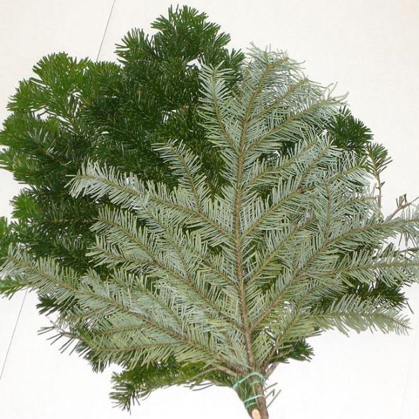 Silver Fir Greens Bunched