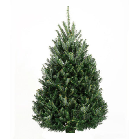 6-7' Fresh Fraser Fir Christmas Tree