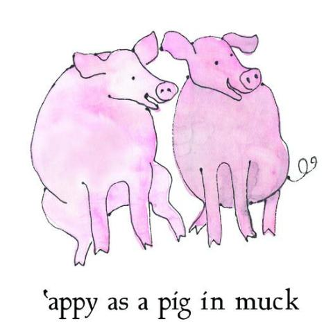 Appy as a Pig in Muck Greetings Card