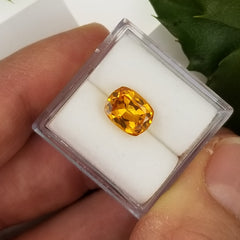 Golden Yellow Sapphire 2.17cts Antique Cushion