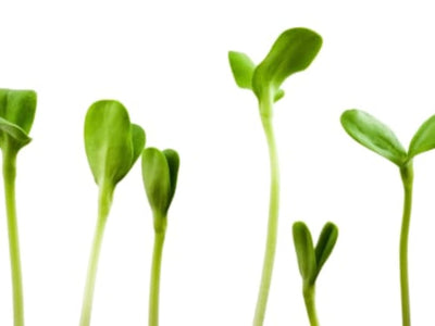 Growing Your Nutrition with Sprouts