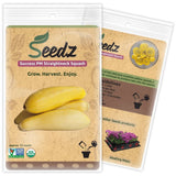 CERTIFIED ORGANIC SEEDS (Approx. 75) - Yellow Squash Seeds - Heirloom Seeds -... - Chickadee Solutions - 1