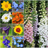 Bulk Package of 30000 Seeds Partial Shade Wildflower Mixture (15 Species) Non... - Chickadee Solutions - 1