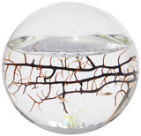 EcoSphere Closed Aquatic Ecosystem Sphere Small - Chickadee Solutions - 1