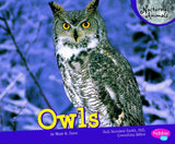 Owls (Nocturnal Animals) - Chickadee Solutions - 1