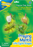 Insect Lore Praying Mantis Life Cycle Stages - Chickadee Solutions - 1