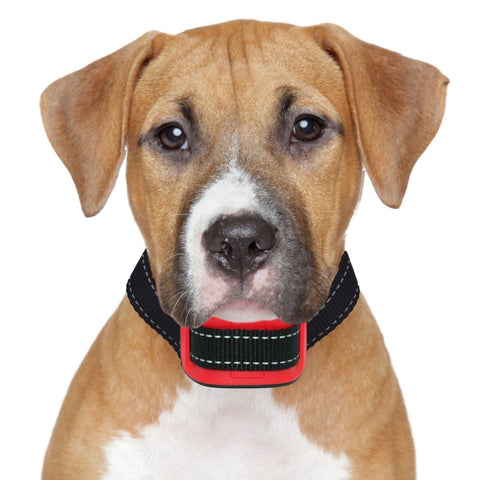 Our K9 Red Bark Collar. Small - Medium Size Naughty Stubborn Dogs. Sound and ... - Chickadee Solutions - 1