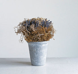 Lavender with Cement Pot