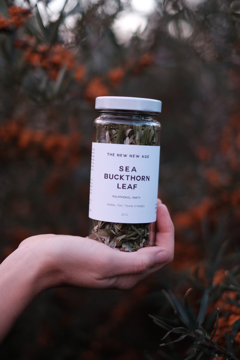 A jar of Sea Buckthorn leaf tea, hand harvested at The New New Age herb farm in Southwestern Ontario, Canada. Sea Buckthorn berries and trees are shown in the background.