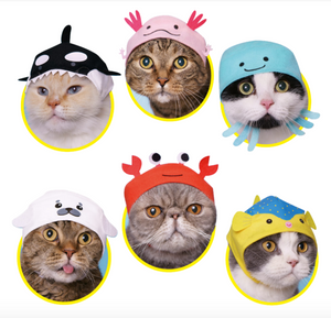 Cat Hat Aquatic Series